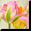 Thumbnail: 1520 - Tulpe rosa