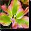 Thumbnail: 1523 - Tulpe grün