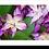Thumbnail: 1560 - Orchidee