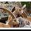 Thumbnail: P3501 - Capricorns