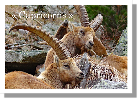 P3501 - Capricorns
