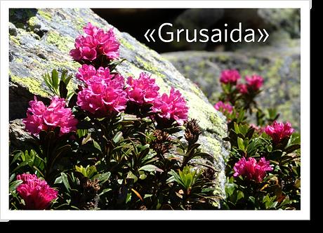 P1012 - Grusaida
