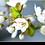Thumbnail: 1550 - Apfelblüte