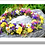 Thumbnail: 3030 - Cranz da Fluors