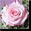 Thumbnail: 1501 - Rose rosa