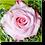 Thumbnail: 1502 - Rose rosa