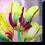 Thumbnail: 1522 - Tulpe gelb-pink