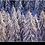Thumbnail: 9005 - Larschs naivüts
