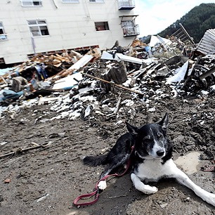 dog laying in pile of rubble from earthquake
