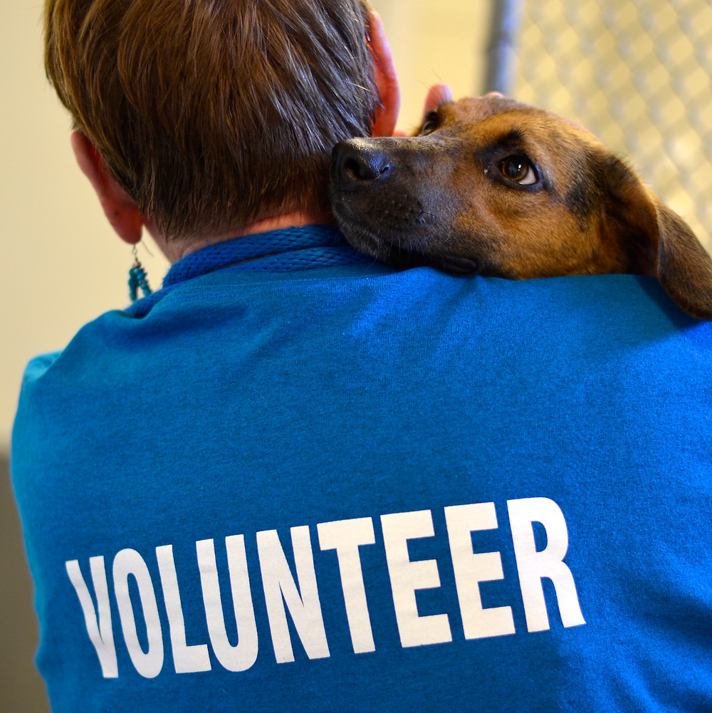 Volunteer holding shelter dog