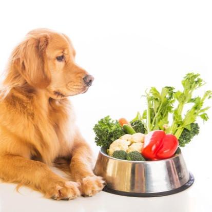 Photo Credit: Central Pet Care