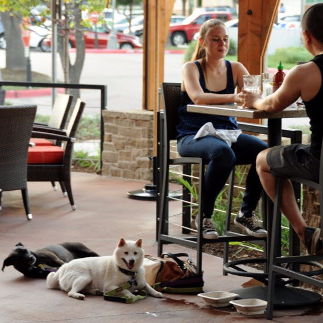 Lunch with dogs at Lazy Dog Cafe