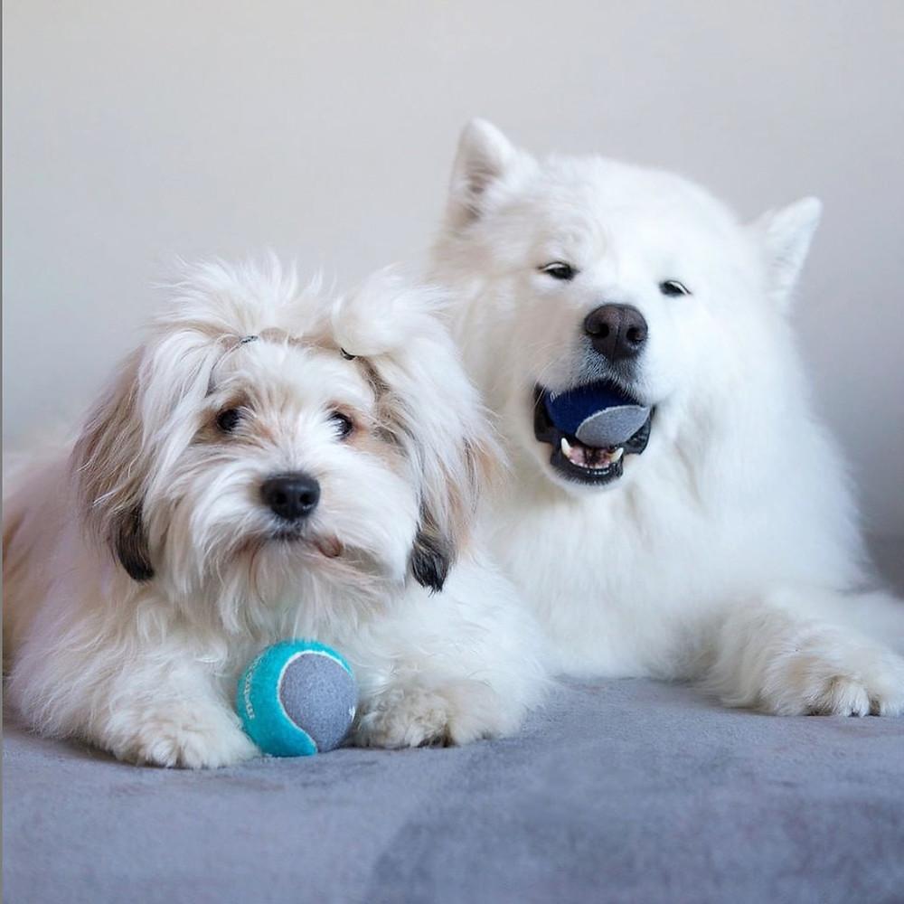 Momo and Bear of @lokistagram holding Metro Balls