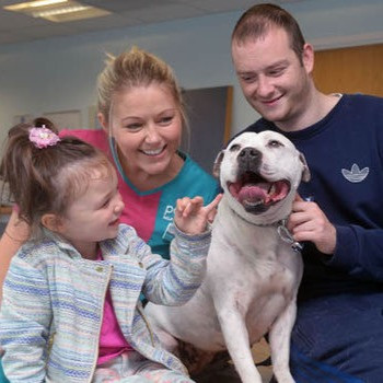 family reuniting with their pit bull after being lost for 3 years