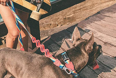 stylish-accessories-for-every-dog-HERO-9