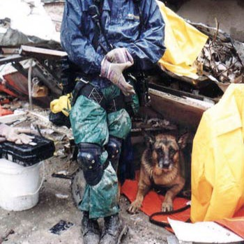 Apollo, the search and rescue German Shepherd, taking a break on the site of 9/11