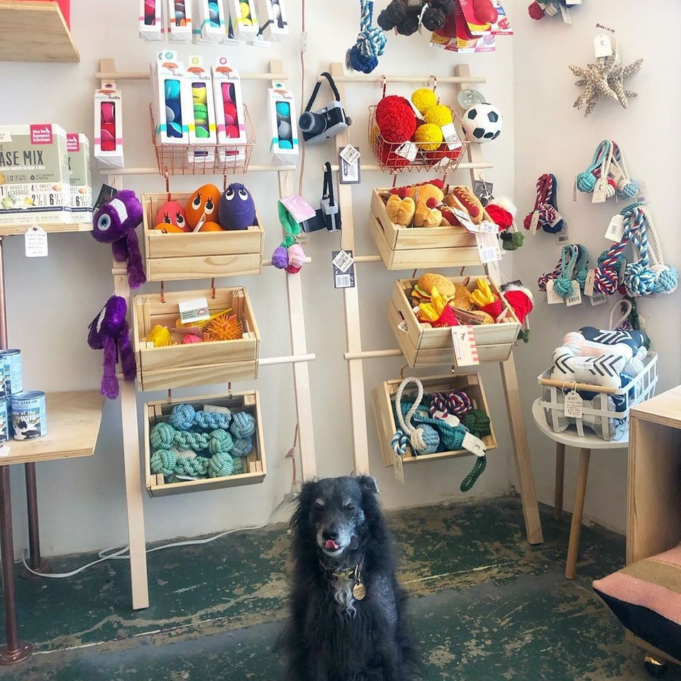 Dog sitting in front of a store display at MaeDay Outpost in Los Angeles