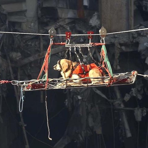 9/11 dog, Riley, on a gurney being transported in the air from a search site back to base camp