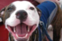 pittiesmile.jpg