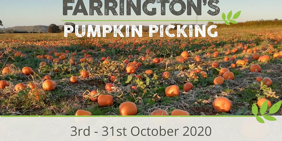 Pumpkin Picking 13th October 2020
