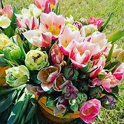 tulips 2.jpg