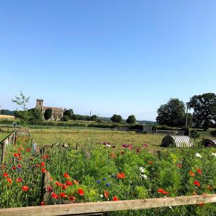 wild flowers at farringtons farm