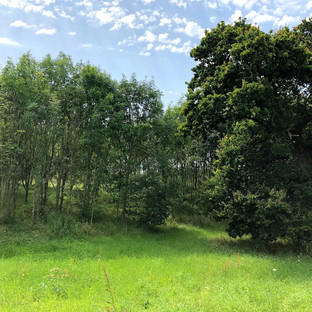 the woods at farringtons farm - local woodland walk near bristol & bath