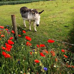 donkey in farm park