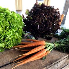 home grown produce at Farringtons Farm shop Bristol & Bath