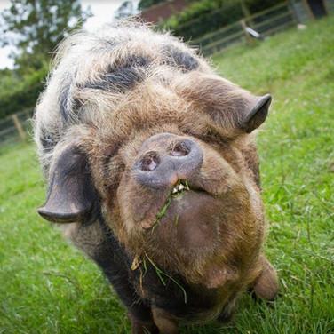 farm animals at farringtons