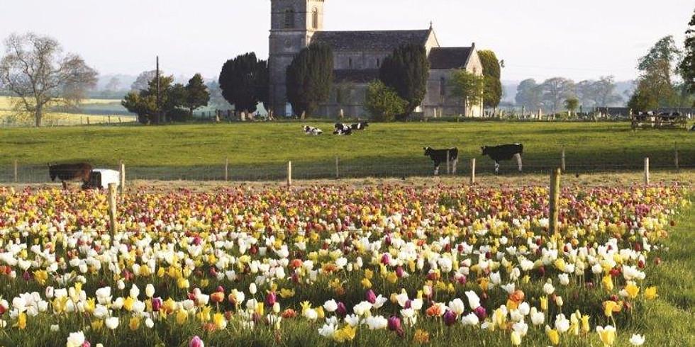 PYO Tulip 13th May