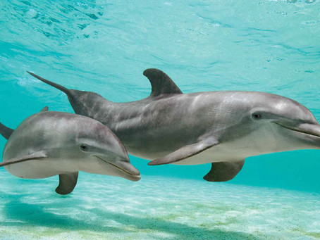 Do you love dolphins?
