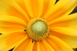 Amarillo: Armonizante