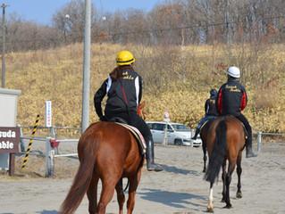 管理競走馬の更新