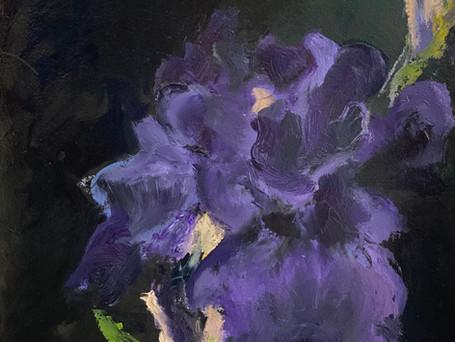 PurpleIris, 10 x 13, oil on paper, 5-20