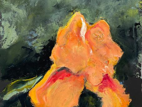 Peach Iris, 10 x 13, oil on paper, 5-20