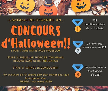 CONCOURS (3).jpg