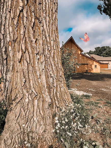 red's barn with tree.jpg