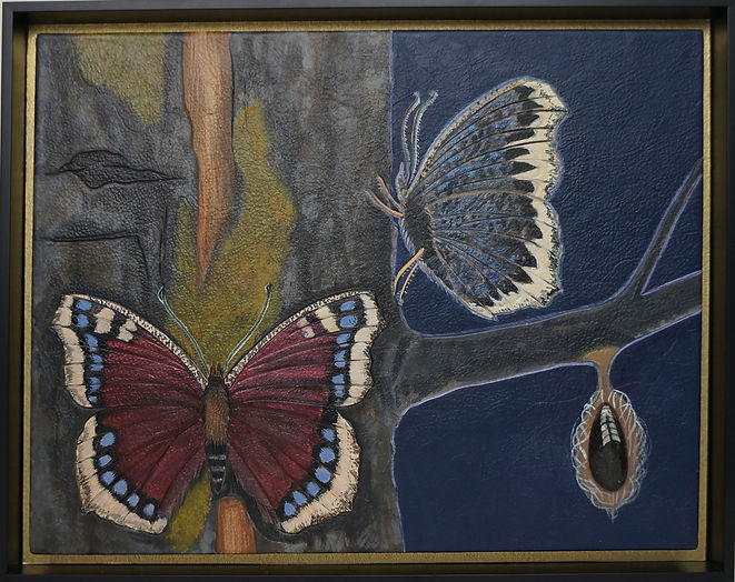 My Mourning Cloak framed.jpg