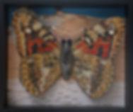 Painted Lady Habitat-Pin.jpg