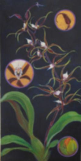 Spider Orchid Lens.jpg