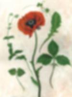 Turtle Ridge Art Scans sm 27638_Poppy co