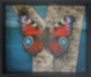 Peacock Butterfly Habitat-Pin.jpg