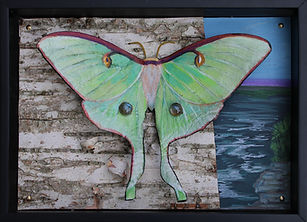 mes luna moth habitat 2020 mixed media 5