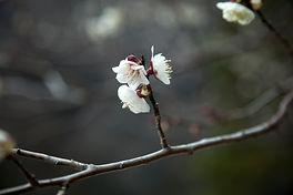 kyoto_1 134bbb.jpg