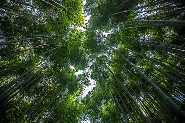 kyoto_1 158bbb.jpg