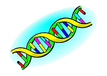 165-1658260_all-4-a-level-ocr-biology-cr