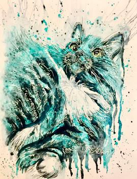 Z Kitty (Zeke)