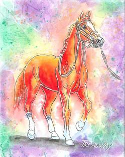 America's Horse (California Chrome)