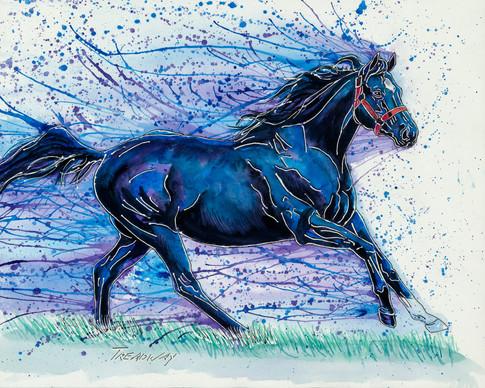 Darkie, A Handsome Black Horse_ Black Beauty